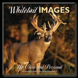 Whitetail Pictures and Photography by George Barnett