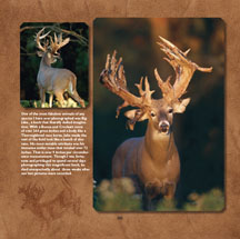Photos of Big Whitetail Deer