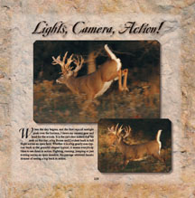 Great Action Photos of Whitetail Deer