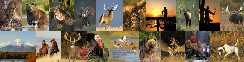 Wildlife Stock Photography for the Hunting, Fishing and Outdoor Industry